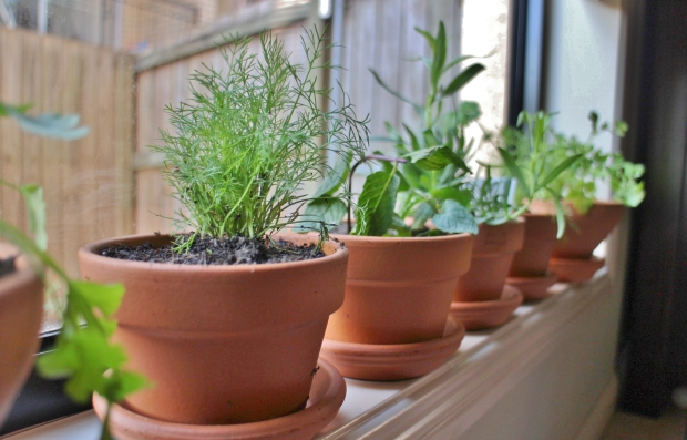 Window sil herb garden